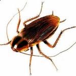 Bugs Bersarang di Website Sahabatku
